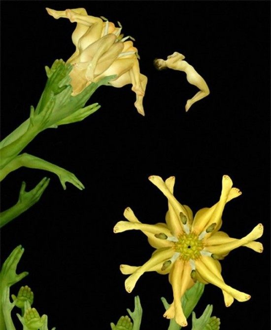 cw yellow-lily1-550x669